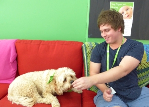 Headspace therapy dog Hully and Ben.