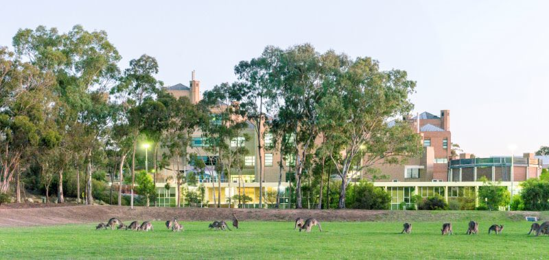 roos on oval