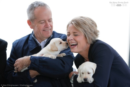 Opposition Leader Bill Shorten and Senator Kristina Keneally with puppies during a visit to Guide Dogs Victoria for a funding announcement, in Melbourne on Saturday 11 May 2019. Opposition Leader Bill Shorten's campaign during the 2019 Federal Election. fedpol ausvotes19 election19 Photo: Alex Ellinghausen